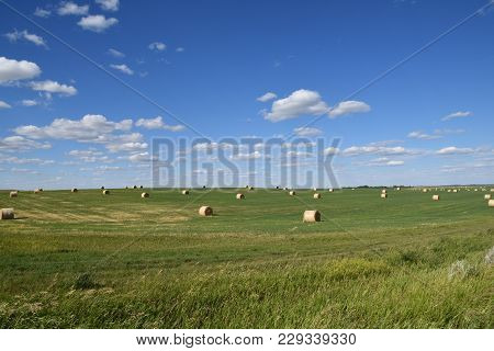 Round Bales Are Spread Throughout The Rolling Hills Of Prairie Hay Land.