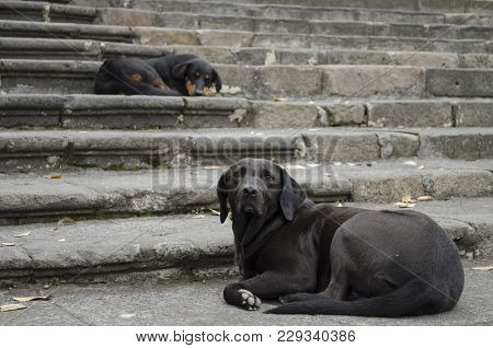 Two Black Dogs Resting In Stairs At The Street. Street Dogs Resting In Stairs. Black Dogs Portrait