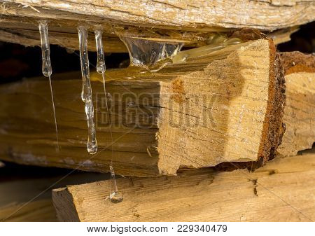 Closeup Of Coniferous Tree Resin Flows Down From The Stack Of Firewood