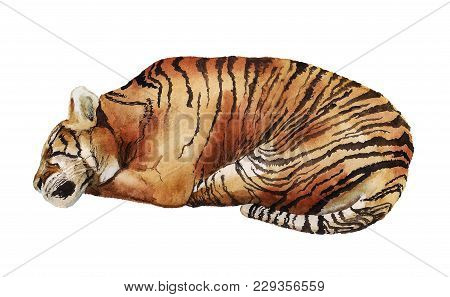 Watercolor Image Of Sleeping Tiger On White Background