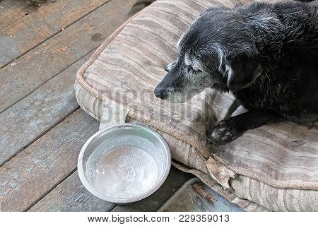A Sad Dog With A Frozen Water Bowl.