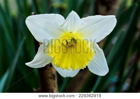 Close Up Capture On A Beautiful Blooming Flower In Spring