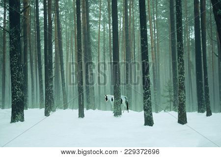 Unicorn Standing In A Mystical Foggy Woods. From Old Age The Trees Were Covered With Green Moss. Uni
