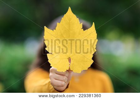 Happy Girl With Maple Leaf As Canadian Symbol. Isolated On Yellow. Best Picture For Magazine. Great