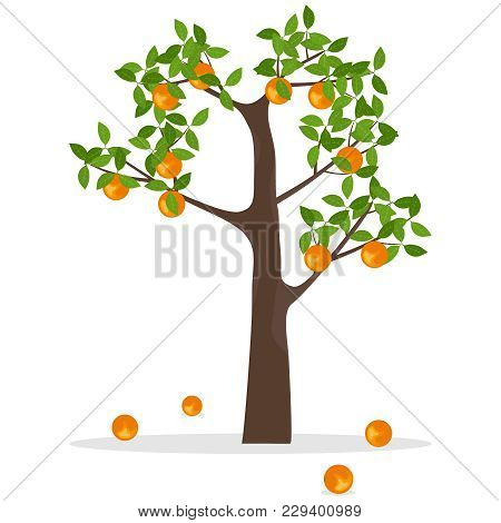 Orange Tree, A Tree With Oranges. Ripe Oranges Hang On A Tree. Flat Design, Vector Illustration, Vec