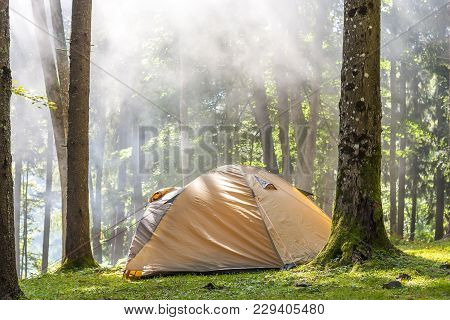 Camping Tent In Green Forest. Tourism Camp.