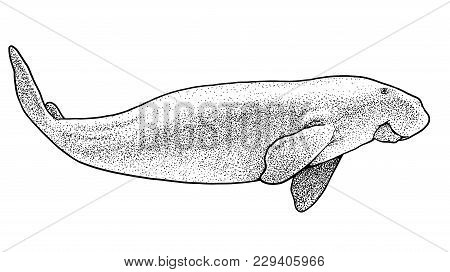 Sea Cow Illustration, Drawing, Engraving, Ink, Line Art