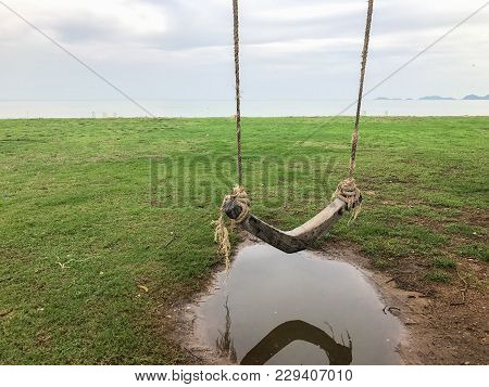 Cradle Hang With The Tree On The Beach