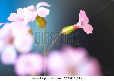 Daisy Flower Against Blue Sky,shallow Dof. Spring Flowers