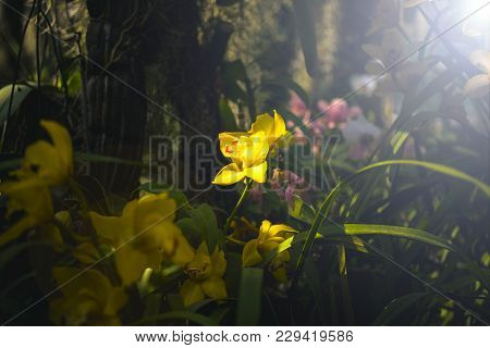 Orchid Flower And Green Leaves Background With Sunlight In Garden.