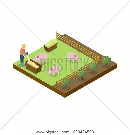 Pigs Breeding On Ranch Isometric 3d Element. Natural Farming, Traditional Agribusiness Isolated Vect