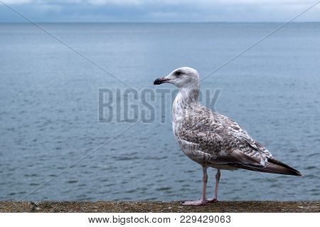 Seagull On The Beach. Tourism, Travel Leisure