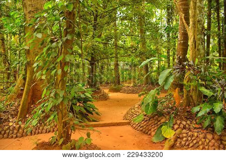 Sri-lanka, Species Garden, Path In Green Trees