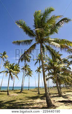 Beautifu Sea View Near The Tropical Beach At Sunny Day