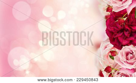 Fantsy Garden, Pink Blooming Rose Buds And Flowers In Rose Garden With Lights Bokeh, Copy Space On P