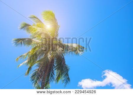 Coco Palm Tree Top With Sun Flare. Palm Tree Crown With Green Leaf On Sunny Sky Background. Tropical