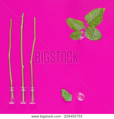 Glass Vials With Stems And Leaves Of Plants Are On A Purple Background. Reproduction Of Plants, Thei
