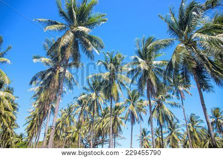 Tropical Landscape With Palm Trees. Bright Tropical Leaf On Sky Background. Coco Palm Tree Silhouett