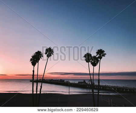 Landscape Photo Of Palm Trees And Harbor At Sunset On Santa Cruz Beach, California