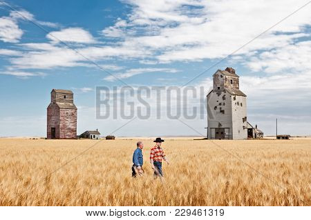 Horizontal Image Of Two Caucasian Cowboy Farmers Walking In A Ripe Wheat Field And Talking With Old