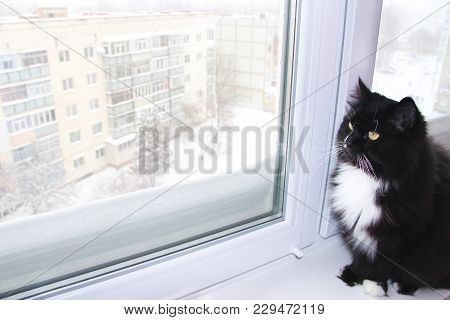 Beautiful Black Cat Looking Out Window Behind Which Snowy Winter. Snow Fell Outside Window