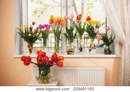 Collection Of Various Tulips In Vases On The Windowsill