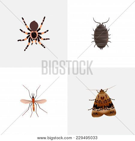 Set Of Bug Realistic Symbols With Bug, Mosquito, Black Widow And Other Icons For Your Web Mobile App