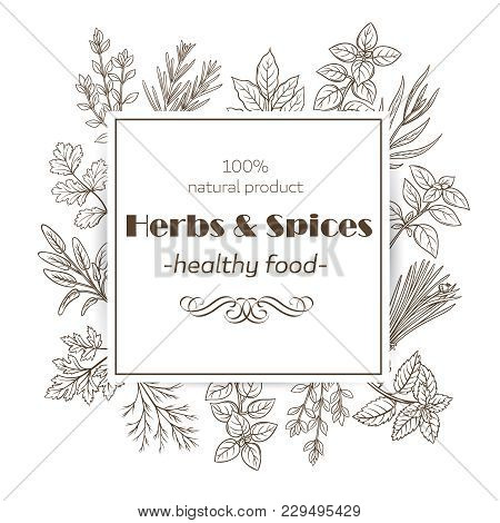 Herbs And Spices. Banner Template With Hand Drawn Sketch Herbs For Farmers Market Menu Design. Vecto