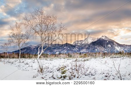 Open Winter Landscape With Fresh Snow In Moor Kendlmühlfilzen South Of Chiemsee In Upper Bavaria. Vi