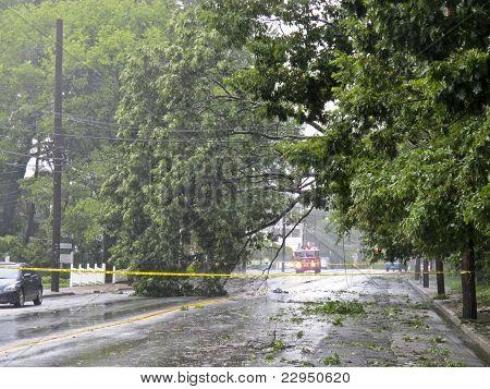 Street closed from fallen tree.