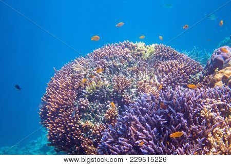 Yellow Tropical Fish In Coral. Tropical Seashore Animals Underwater Photo. Coral Reef Animal. Warm S