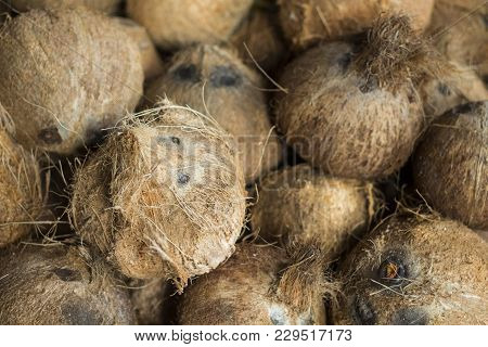 Whole Coconuts In Pile Closeup Photo. Exotic Fruit Or Nut. Brown Hairy Coconuts For Sale. Selling Co