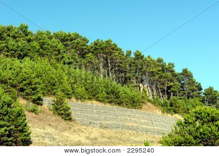 Cloastal Trees