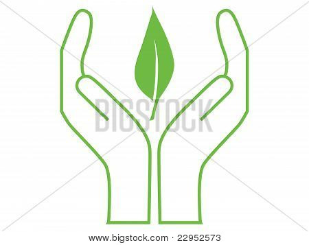 leaf protected by hands