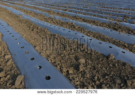 Plastic Mulch Is A Product Used, In A Similar Fashion To Mulch, To Suppress Weeds And Conserve Water