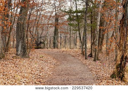 Beautiful Landscape Scene Of A Walking Trail In The Woods In Autumn