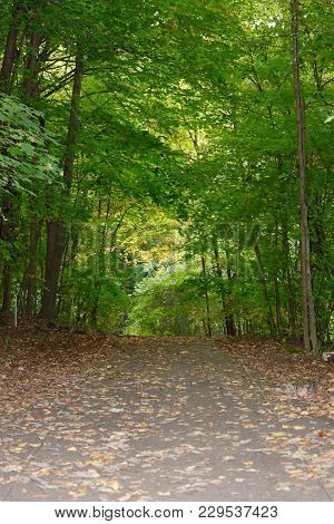 Walking Trail In The Woods In Autumn