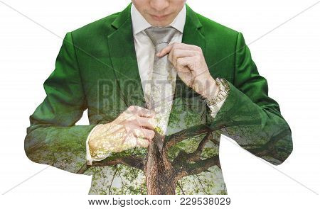 Double Exposure Businessman In Green Suit With Big Tree, Isolated On White Background