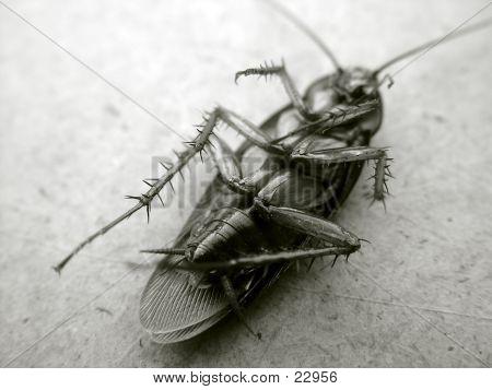 Cockroach 1