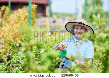 Portrait Of Happy Senior Woman Working In Glasshouse Spray Treating Plants And Looking At Camera, Co