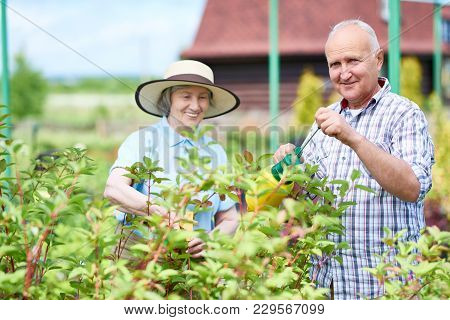 Portrait Of Smiling Senior Couple Posing While Working In Garden Together, Spray Treating Plants, Co