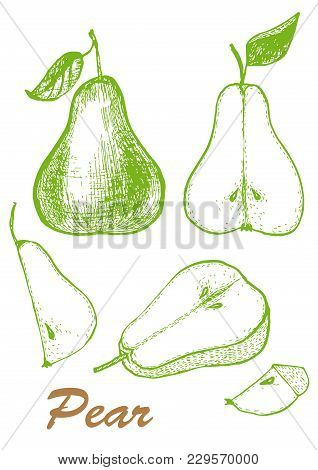 Whole Pear And Slices. Hand Drawing Of A Pear. Botanical Illustration Of Fruits. Vector Illustration