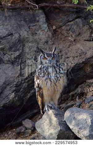 Indian Eagle Owl, Bubo bengalensis, Hampi, Karnataka, India poster