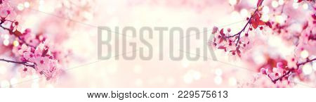 Spring border or background art with pink blossom. Beautiful nature scene with blooming tree and sun flare. Easter Sunny day. Spring flowers. Beautiful Orchard Abstract blurred background. Springtime