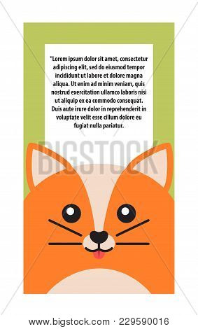 Animal Cover, Cat Of Orange Color With Glowing Eyes And Ears, Whiskers, Card With Text Sample Placed