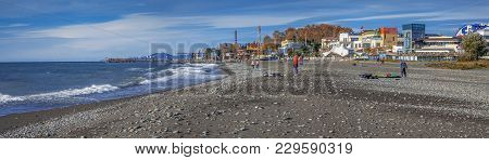 Sochi, Russia - November 3, 2016: Adler. Beach Seagull.