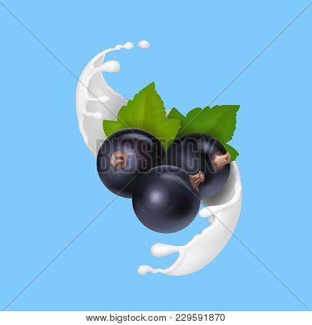 Yogurt Or Milk Splash With Black Currant.