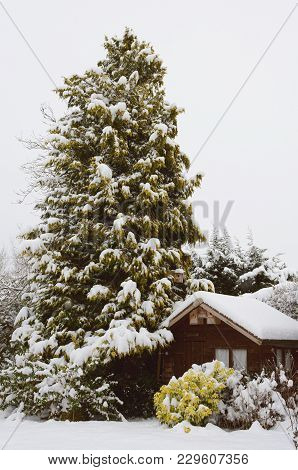 Tranquil Snowy Scene Of A Wooden Hut Covered In Snow, Nestled Against A Tall Conifer Tree