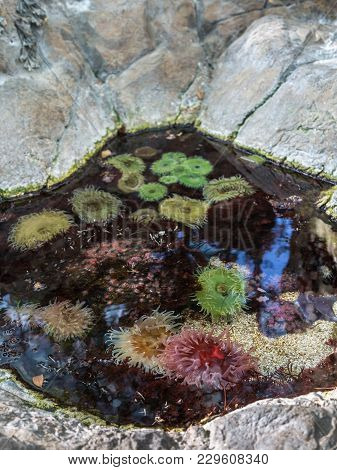 Bubble-tip Anemone, Some Colorful Aquatic Vegetal Plants.