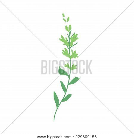Vector Flat Abstract Green Fern Plant Icon. Wild Meadow Field Grass Garden Spring Easter, Women Day